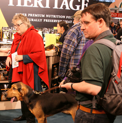 A busy time at Crufts