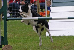 Dog Agility Class