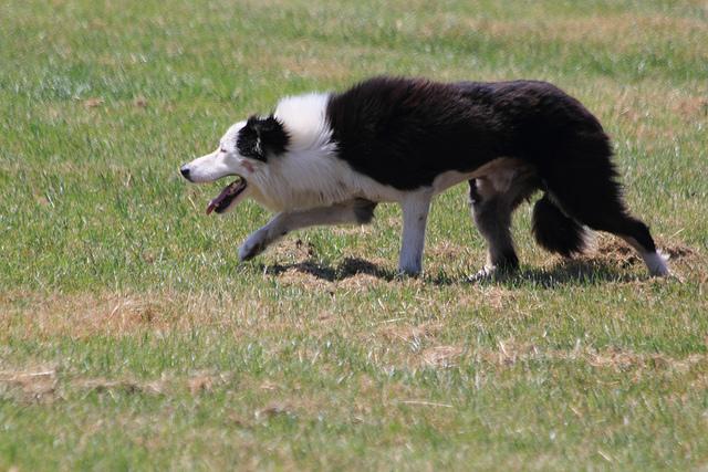 Sheepdog by J E McGowan