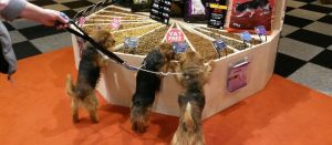 breakfast at crufts