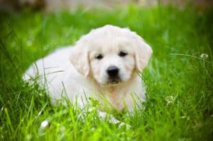 puppy_grass