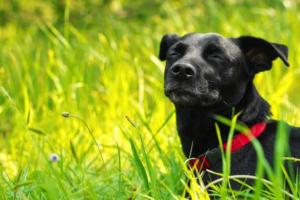 senior_dog2