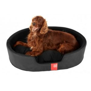 Large Poi Dog Bed
