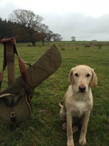 Labrador on first shoot