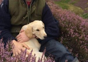 Gun dog training with Oscar