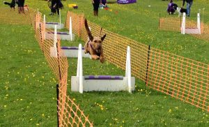 Image courtesy of Bev Rutherford, Teesdale Flyball Club