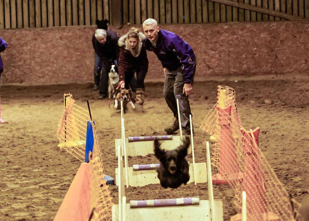 Training Run at Teesdale Flyball Club