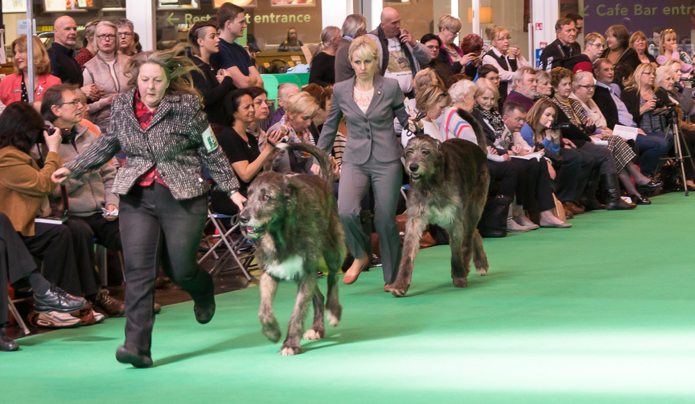 Breed Class at Crufts