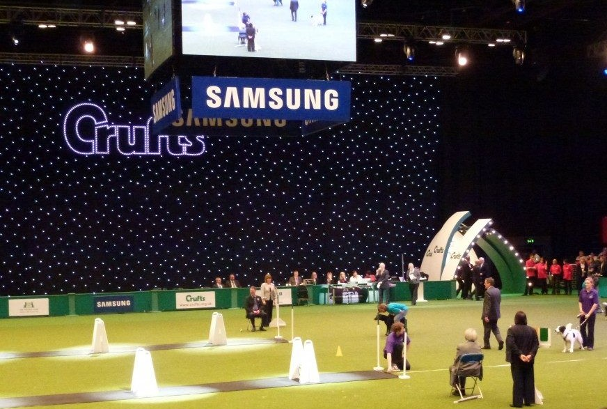 Teesdale Flyball Club at Crufts