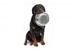 Specialist Dog Foods Image